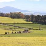 2015-11-01 - RNR Le Puy - Arthur Pichon-5
