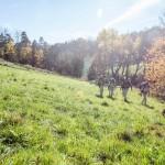 2015-11-01 - RNR Le Puy - Côme de Dumast-14