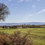 2015-11-01 - RNR Le Puy - Côme de Dumast-18