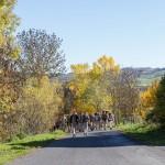2015-11-01 - RNR Le Puy - Côme de Dumast-71
